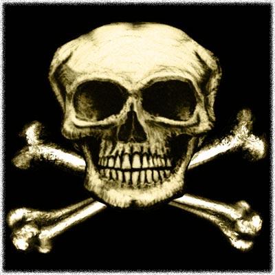 bones of skull. ones of skull